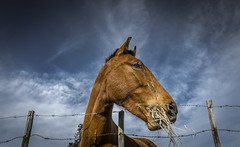 it`s good (pppkosta00) Tags: horse cavalo rede almoo arame farpado estacas equitaao vedaao