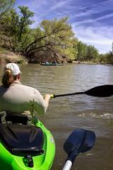 The Verde:  Bumper Boats (dbpeterson723) Tags: river kayaking verderiver kayaks verdevalley riverecosystem cottonwwodaz