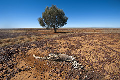 Boulia road (Cruising, traveling & dive pics.) Tags: outback approved 2015