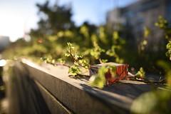 Good morning spring (Henry Sderlund) Tags: sunset test art sunrise lowlight focus bokeh outdoor f14 infinity review sigma images sample 24mm noise vignetting chromatic dg sharpness aberration hsm