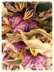 NightShade (LauraCrooks) Tags: trip travel pink flowers vacation plants plant flower color green love nature floral colors leaves yellow closeup garden painting easter landscape outside outdoors happy photography design utah photo leaf petals spring ut flora scenery colorful pretty pieces cheery view purple natural bright gardening postcard rich creative scenic may picture deep lavender vivid shades petal flowerbed nightshade part lilac card photograph hues postcards area greenery roadside cheerful upclose sumi tones hue depth section lavendar muted sumiko