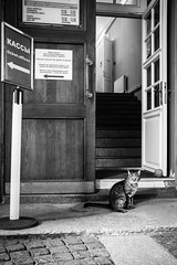 A kitty in the Hermitage Museum, Saint Petersburg, Russia (inchiki tour) Tags: travel bw museum cat photo europe russia kitty saintpetersburg hermitage   bnw leningrad 2014