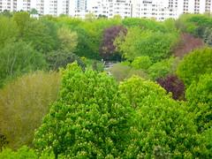 noch ein Balkonblick (radochla.wolfgang) Tags: grn bume gropiusstadt