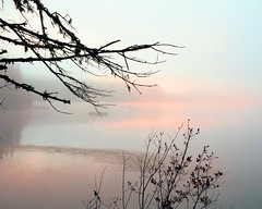 (GBrosseau) Tags: pink blue mist lake tree nature silhouette fog landscape shore barebranches