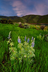 """Storm and Lupine (Scott Stringham """"Rustling Leaf Design"""") Tags: hello storm nature clouds canon landscape photography utah photo spring ut escape looking desert graphic wind earth air boom onceuponatime photograph bolt passion land lookatme strike thunderstorm lightning fullframe dslr convection electrical thunder lupine stormclouds lightningstrike cumulonimbus lettherebelight stringham electricalstorm passingstorm lightningstorm getoutside bedifferent raggedclouds canon6d bettereveryday buymeabeer scottstringham rustlingleafdesign rustlingleaf wwwrustlingleafdesigncom stormandlupine"""