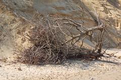 PAKEFIELD, SUFFOLK (meddie / aka Gramps) Tags: trees sea beach suffolk sand bluesky cliffs desolate pakefield