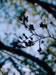 2015-09-28 10.41.14 1 (anastasiya_klenyaeva) Tags: sky nature yellow russia autmn     saratov vsco vscocam vscorussia vscosaratov