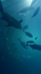 Plymouth Aquarium - Predators Tank 8 (jack_lanc) Tags: plymouth acquarium wildlife fish sharks conservation marine biology devon predator predators