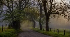 Sparks Fly (Tony Barber --The Jolly Swagman) Tags: road park trees mist mountains tree fog rural sunrise fence season spring post national dogwood greatsmokymountains gsmnp fencerow