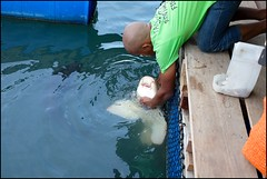 160424 Boat Outing 30 (Haris Abdul Rahman) Tags: family vacation malaysia langkawi kedah boatride fishfarm tanjungrhu harisabdulrahman harisrahmancom fotobyhariscom langkawitripapril2016 tanjungrhufloatingrestaurantfishfarm