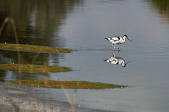 _DSC8595 (Carmen Coronado) Tags: naturaleza valencia fauna pjaros albufera sigma150500f563apodgos nikond750