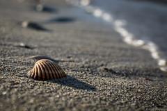 Summer - EXPLORED (kritsaloskostas) Tags: sea summer beach water sand shell wave