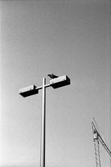 Above the ground (Tiefengeist) Tags: 50mm delta 400 rodinal nikonfe ilford ilforddelta400 1100 oneshot agfarodinal r09 ais50mmf12 rodinalr09oneshot1100