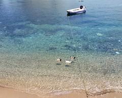 Ducks at sea (sandaodiatiu) Tags: birds boat transparency aegeansea