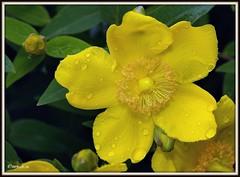 _JVA6905 (mrjean.eu) Tags: park pink flowers blue roses white france flower macro fleur rose yellow fleurs garden nikon jardin botanic lorraine botanique parc metz 105mmf28