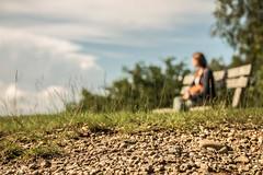 26062016 (gilllambrigts) Tags: summer sky tree grass focus ground