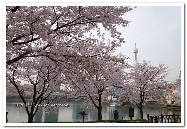 석촌호수벚꽃길01