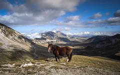 Wilder Mind (Alessandro*Passerini) Tags: sky horse mountain nature wildlife ngc abruzzo littletibet passeart alessandropasserini