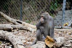 20150411 (Paginafa Kenny Hu) Tags: animal monkey nikon kaohsiung   d610   formosanmacaque