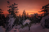 Red Forest (MilaMai) Tags: koli national park sunset red forest snow snowdrift crownsnowload winter sky cold clouds milamai landscape trees joensuu easternfinland spruce nature hills horizontal outdoors maisema winterscene scenics beautiful silhouette attraction geotagged