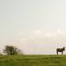 Donkeys grazing