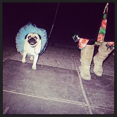 Pug Dog in Pastel Blue Tutu Struts Down Waller Street Project PugWay (Lynn Friedman) Tags: instagramapp square squareformat iphoneography amaro dog chien tutu halloween fashion walk 94117 haight lowerhaight sf sanfrancisco ca california usa lynnfriedman lynnrfriedman costume pet costumes fun outofcontext festivities colorful happy silly pg stock statement style personalexpression taste pooch cute face instagram webstagram webstapick 94114 casteo ilovesf pug walking leash attitude clothes castro walksf woonerven event spur 94105 advocacy nonprofit pedestriansafety missionst