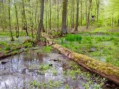 Swamp in the forest - Haster Wald (mikehaui60) Tags: green forest pen germany olympus swamp lowersaxony epm2 olympuspenepm2