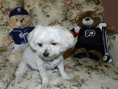Daily Dog Challenge - Between (marilyntunaitis) Tags: hockey baseball plush stuffedanimals bella teddybears dogchal dailydogchallengebetween