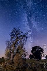 Cielos de Daimiel (Carlos J. Teruel) Tags: nikon tokina nocturna estrella ciudadreal daimiel vialactea xaviersam carlosjteruel d800e