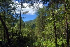 La Sal, Cordillera Central (Dax M. Roman E.) Tags: republicadominicana lasal cordilleracentral reservacientificaebanoverde rcev daxroman