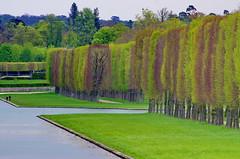 Versailles - 61 le long du Grand Canal dans le parc du Chteau de Versailles (paspog) Tags: park france castle spring versailles april schloss avril chteau parc printemps grandcanal castel frhling 2016 parcduchteau