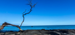 Solace ($ Abhijit $) Tags: blue sky moon tree beach water clouds canon landscape dead rocks pacific wide tokina abhijitjadhav