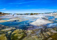 Norris Geyser Basin (rlonas) Tags: winter lumix yellowstone algae geology february thermal norris norrisgeyserbasin p1000089