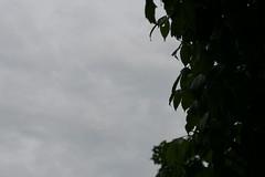 Summer Leaves (DapperDaphne) Tags: sky cloud storm water field leaves rain weather skyline clouds leaf dof nimbus drop cumulus droplet depth skyskape cumulo