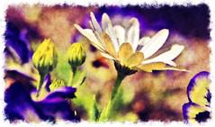 Thank You...HSS! (LotusMoon Photography) Tags: flowers painterly postprocessed nature floral beautiful digital outdoor framed prayer border vivid textures digitalpainting hss vividcolor filterforge sliderssunday annasheradon