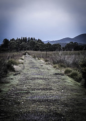 Emu Bay Railway Line (paulledger81) Tags: history formation tasmania melba zeehan ebr tarkine emubayrailway