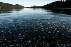 Orcas Island (e a cassidy) Tags: ocean travel usa washington pacific orcasisland urbanfarm