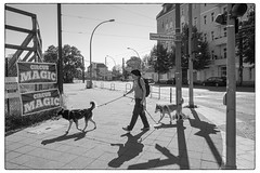 DSCF8821_bw_ (lindgren2005) Tags: blackandwhite berlin dogs germany walking deutschland noiretblanc magic hund fujifilm tyskland svartvitt xt1