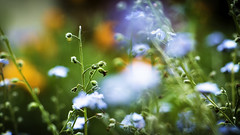 Clouds Garden. (Grf f the Pp [@Grfbd]) Tags: nature colors clouds garden spring backyard canoneos70d