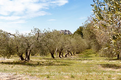 Off Road! (doublejeopardy) Tags: france tree olive fr lesbauxdeprovence provencealpescotedazur provencealpesctedazur