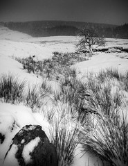 Lone tree. Great Mell fell, Cumbria. (markrbowman) Tags: snow tree grass cumbria snowscene greatmellfell