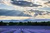 Lavender Fields (Scott8586) Tags: ardeche elements france godlight lavender sky sun saintprivatdechampclos languedocroussillonmidipyrénées