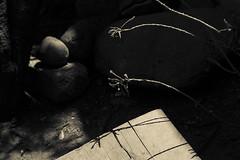 (Ivn Rubn) Tags: old light shadow plants naturaleza brown detail luz caf monochrome sepia contrast contraluz hojas plantas natural time branches dream shapes places sombra minimal textures nostalgia lugares rincones contraste instant gloom formas delicate intimate leafs minimalismo abstracto contemplative viejo abstarct texturas longing sueo contemplation subtle corners tiempo instante ramas penumbra monocromtico delicado ntimo contemplacin contemplativo nimiodetalle backlightingsutil