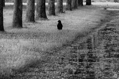 Like in Autumn (mostodol) Tags: blackandwhite bw white black nature monochrome wow fuji noiretblanc nb fujifilm xa1 greatestphotographers