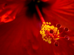 P7129600 (Mark J. Stein) Tags: flower color nature closeup colorful longwoodgardens 2016 photobymarkjstein photobymarkstein