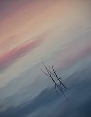 Dreamcatcher (Civilis Brutus) Tags: sunset reflection water clouds zonsondergang nikon wolken surface twigs dreamcatcher reflectie spiegeling takjes p7800