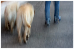Dog-sitter (ICM) (kasiawrzodakdt) Tags: icm intentionalcameramovement
