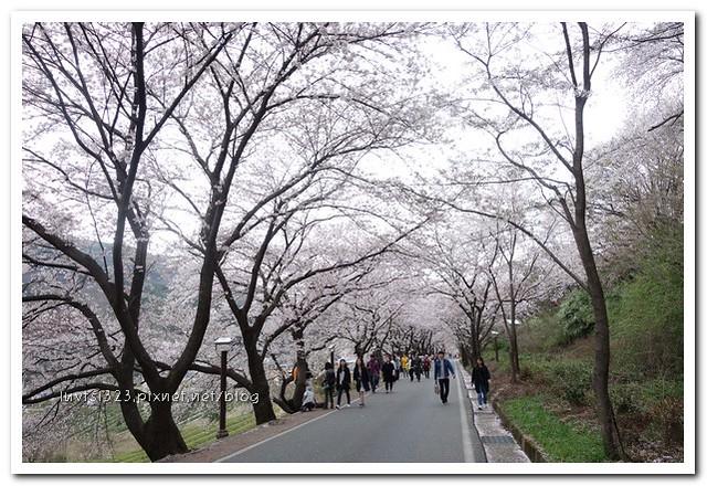 화개십리벚꽃길18
