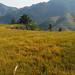 Dazhai - Longsheng Rice Terraces (Dragon's Backbone) - 5