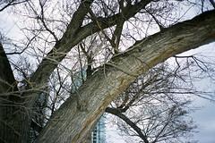 untitled 0529_08 (Levi Wedel) Tags: city urban calgary film analog 35mm fuji olympus alberta stylus fujifilm 100 epic mjuii reala yyc
